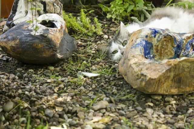 The cat exploring the pieces of Cley Circle